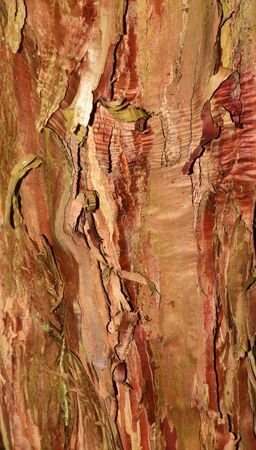 unmatched: Tree bark as abstract.Natures own unique designs, unmatched by man.