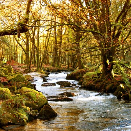russet: An Autumn scene with golden colored leaves framed by the setting sun through the stand of trees, and a stream wending its way between the moss covered rocks..