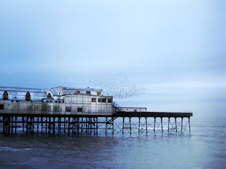 roosting: Aberystwyth pier with starlings Stock Photo
