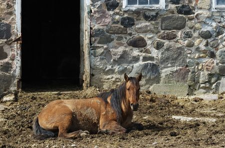 Brown Horse Resting by the Stone Barn