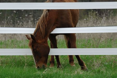 Grass is Always Greener on the Other Side . . . Stock Photo