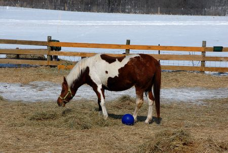 Pinto and Blue Ball photo