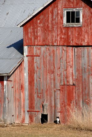 Cat by the Old Red Barn Stock Photo - 3300984