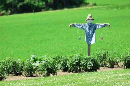 Scarecrow in the Garden 版權商用圖片