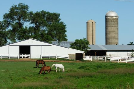 Three Horses in Pasture by White Barn Stock Photo - 3387479
