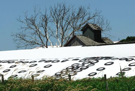 Tires on Tarp Covering Silage Stock Photo