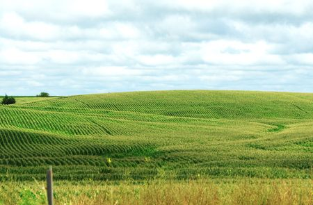 partly: Corn Field on Partly Cloudy Day Stock Photo