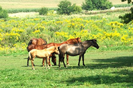 Five Horses Near Shade Tree photo