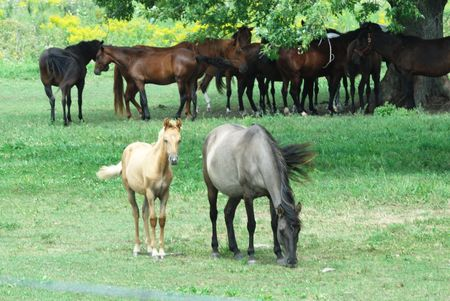 Mare and Colt with Friends Behind Stock Photo - 3563509