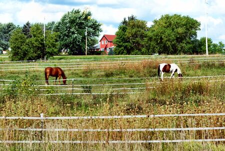 Brown and Pinto Horse Grazing by Red House Reklamní fotografie