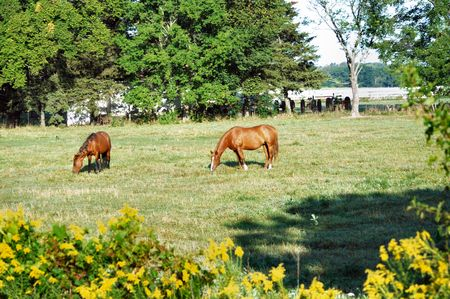 Two Horses Grazing with Tractors in the Background Stock Photo - 3587816