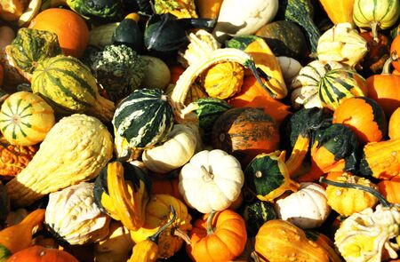 Variety of Gourds and Squash photo