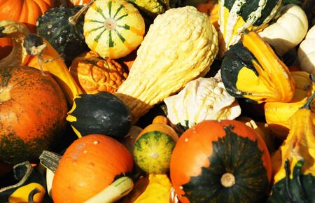 Close-up of Gourds, Squash, and Pumpkins photo