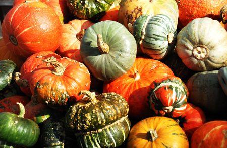 Weird Pumpkins and Gourds  photo