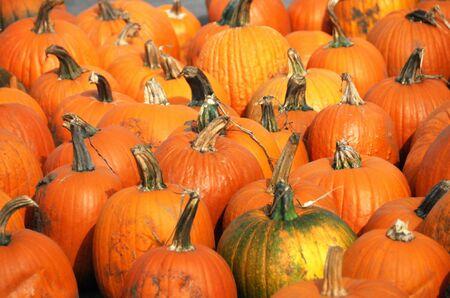 Pumpkins on the Ground photo