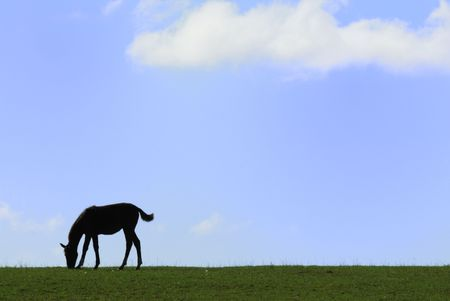 Silhouette of Colt on the Hillside photo