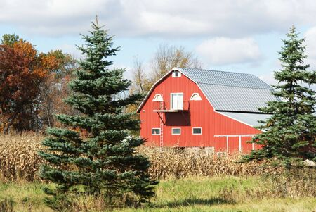 evergreen trees: Red Barn Between Evergreen Trees