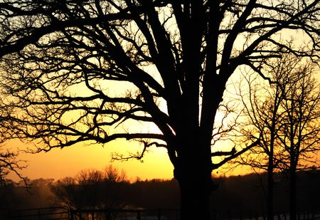 Silhouette of Leafless Tree at Sunset Stock Photo