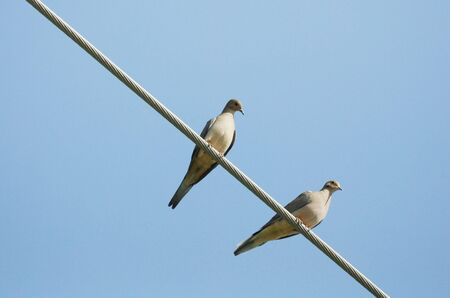 Two Doves on a Wire photo