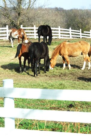 Herd of Horses Grazing Stock Photo - 4056980