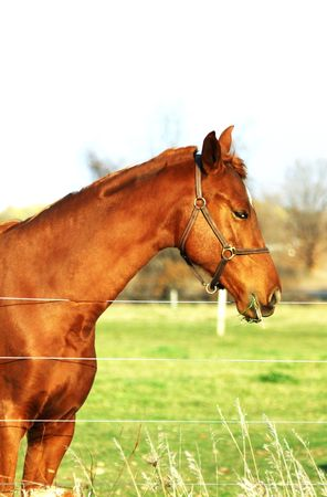 rein: Profile of Big Brown Horse
