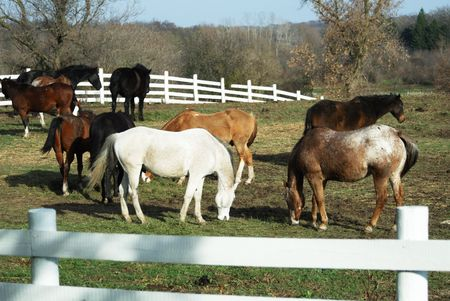 Horses on the Hill in the Corral Stock Photo - 4076673