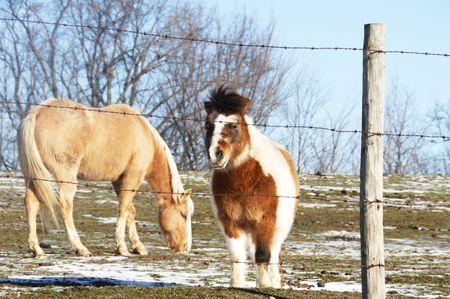 Pony and Palomino, Focus on Pony photo