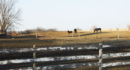 Three Black Horses on the Dry Pasture Hill Stock Photo - 4522514