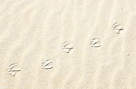 bird tracks: Ave Tracks in the Sand
