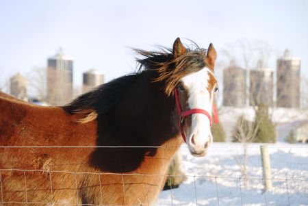 wind blown hair: Big Brown Horse in the Wind