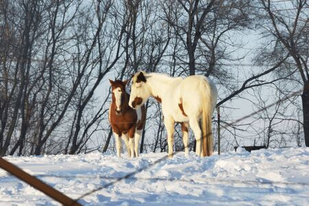 Two Horses on Snowy Hill photo