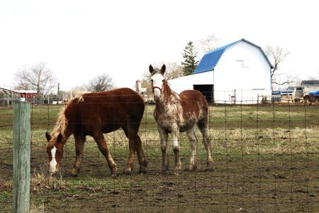 Two Horses and White Barn with Blue Roof photo