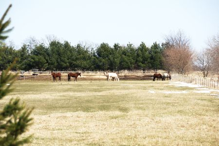 Horses in Winter Pasture photo