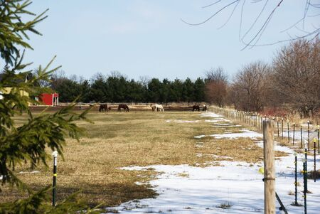 Horses in Winter Pasture with Snow photo