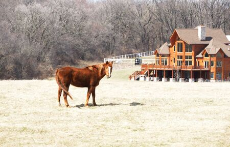 Brown Horse by Big Log Cabin Home photo