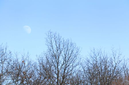 Afternoon Moon Over the Trees