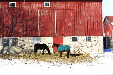 Two Horses by Red Barn, Horizontal Stock Photo - 4914535