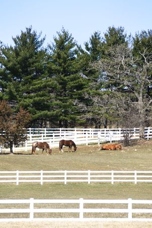 Horses in Pasture with White Fence (vertical) Stock Photo - 4970751