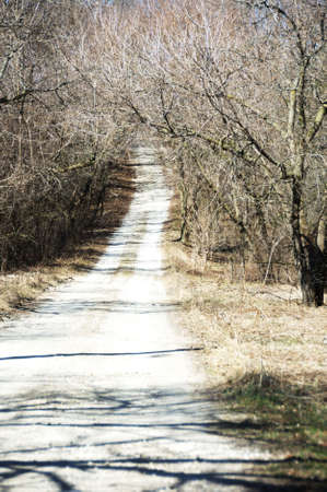Driveway Through Brown Trees Stock Photo - 4993326