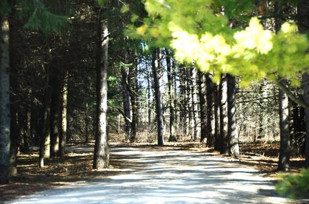road and path through: Driveway Through the Woods (horizontal)