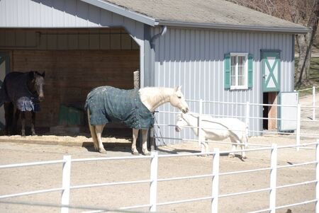 Big Horse in Blanket by Pony Behind White Fence Banco de Imagens