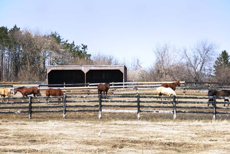 corral: Herd of Horses in Corral Stock Photo