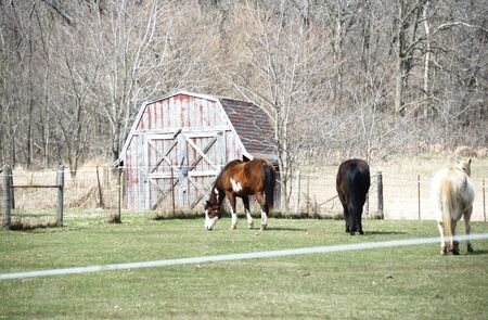 Three Horses Grazing by Small Barn Stock Photo - 5046456