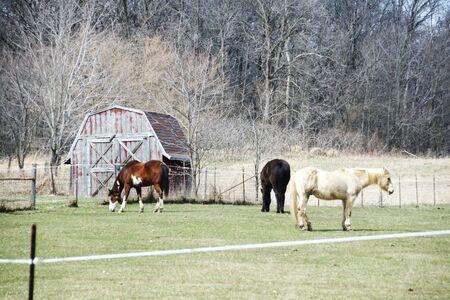 Three Horses by Barn Storage Shed Stock Photo - 5046457