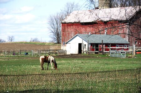 Pinto Grazing by Old Barn photo