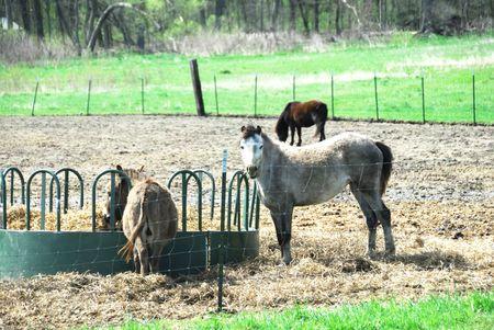 Horse and Two Donkeys photo