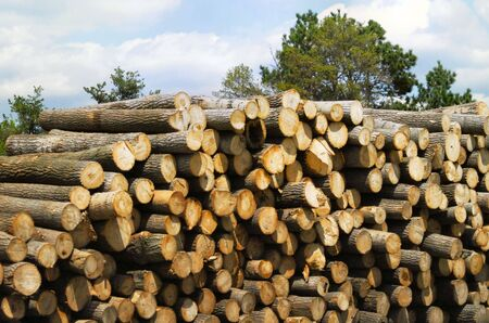pile of logs: Pile of Logs  Stock Photo