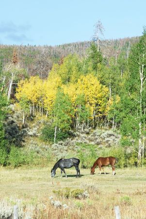 Two Horses in Fall Pasture photo