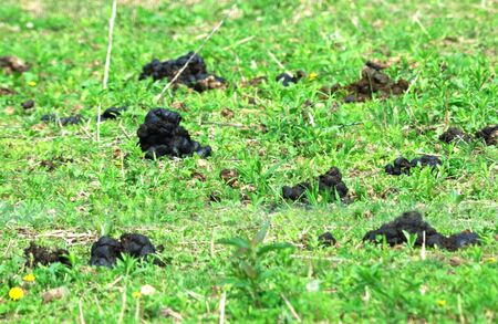 manure: Horse Manure in the Pasture