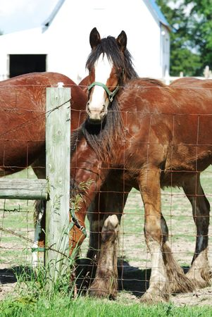 Brown Horse Friends by Fencepost photo